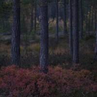 Autumnal archipelago